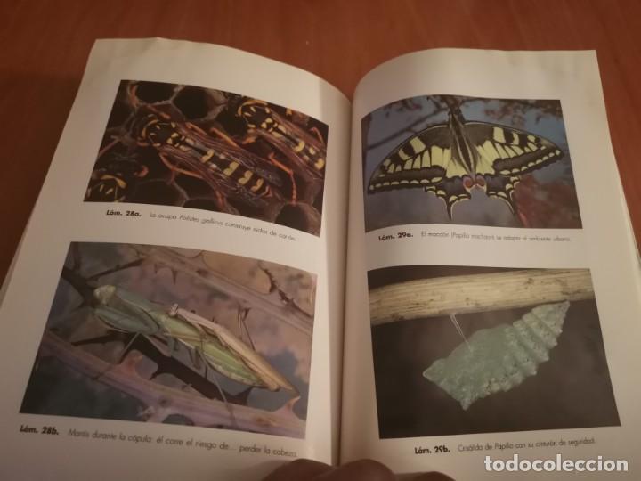Libros de segunda mano: MAGNÍFICO LIBRO ELOGIO DEL INSECTO POR ENRICO STELLA ARIEL CIENCIA 1993 - Foto 23 - 194246817