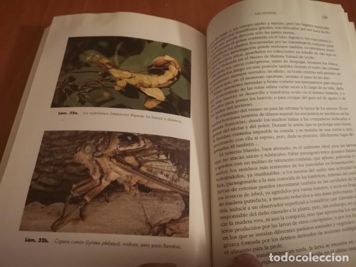 Libros de segunda mano: MAGNÍFICO LIBRO ELOGIO DEL INSECTO POR ENRICO STELLA ARIEL CIENCIA 1993 - Foto 25 - 194246817
