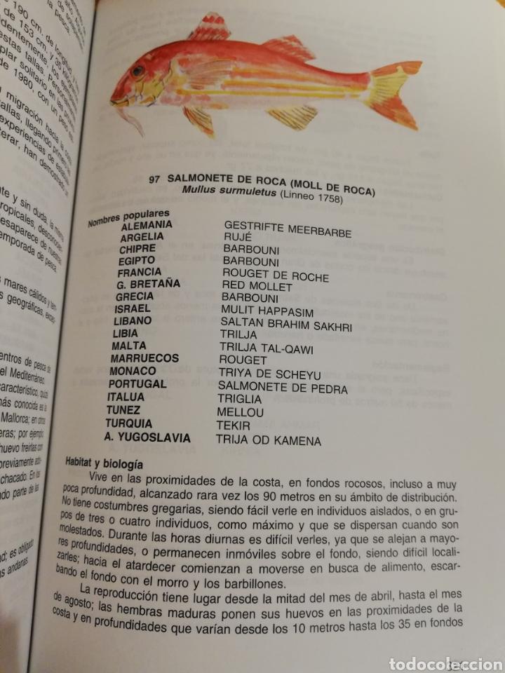 Libros de segunda mano: LA PESCA EN EL MAR BALEAR (MIGUEL MASSUTI OLIVER) - Foto 11 - 194252287