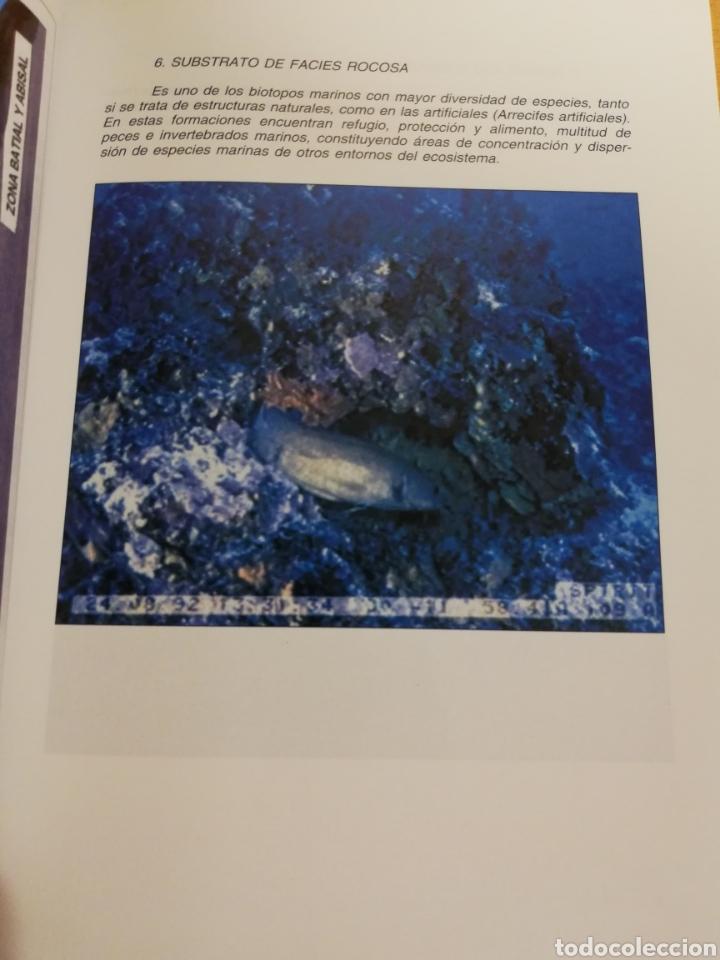 Libros de segunda mano: LA PESCA EN EL MAR BALEAR (MIGUEL MASSUTI OLIVER) - Foto 12 - 194252287