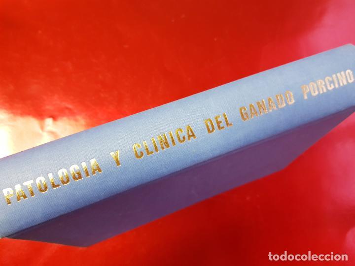 PATOLOGÍA Y CLÍNICA DEL GANADO PORCINO-1980-TRATA CORONAVIRUS-NEOSÁN-TAPAS DURAS-EXCELENTE (Libros de Segunda Mano - Ciencias, Manuales y Oficios - Biología y Botánica)