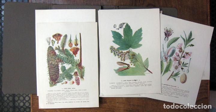Libros de segunda mano: MINISTERIO DEL AIRE - ATLAS DE PLANTAS PARA LAS OBSERVACIONES FENOLÓGICAS - 1943 - METEOROLOGÍA - Foto 3 - 194509545