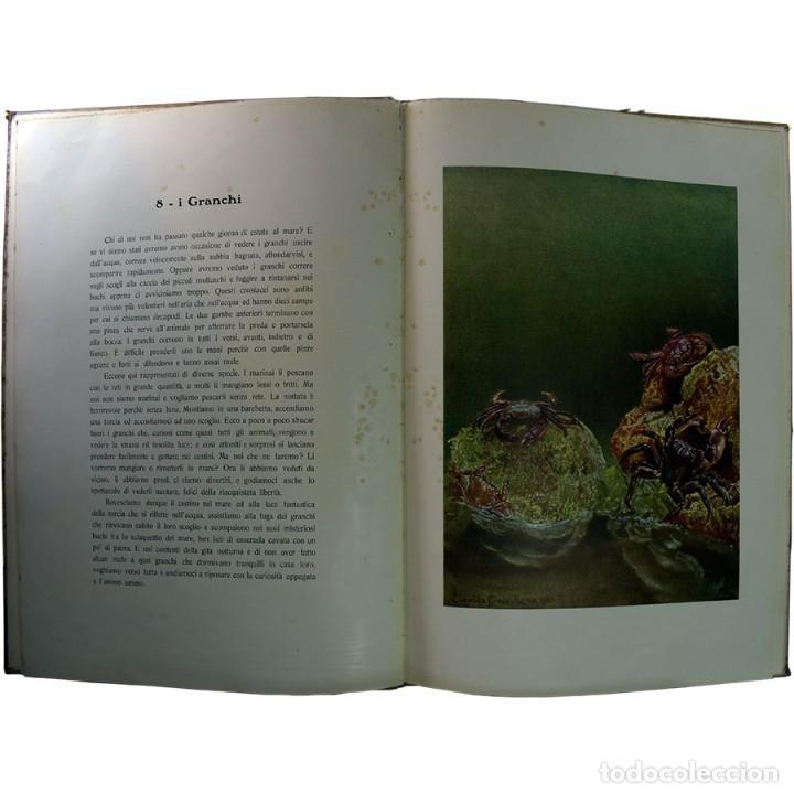 Libros de segunda mano: LIBRO ANTIGUO. A VOI BIMBI, EDOARDO GIOJA. 1960 - Foto 8 - 194886425