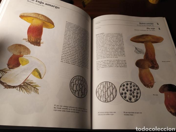Libros de segunda mano: Setas tóxicas. Guía para reconocer las especies venenosas - Foto 5 - 194901545