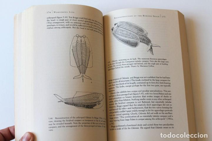 Libros de segunda mano: Stephen Jay Gould - Wonderful life. The Burgess Shale and the nature of history - Norton - Foto 10 - 195308543