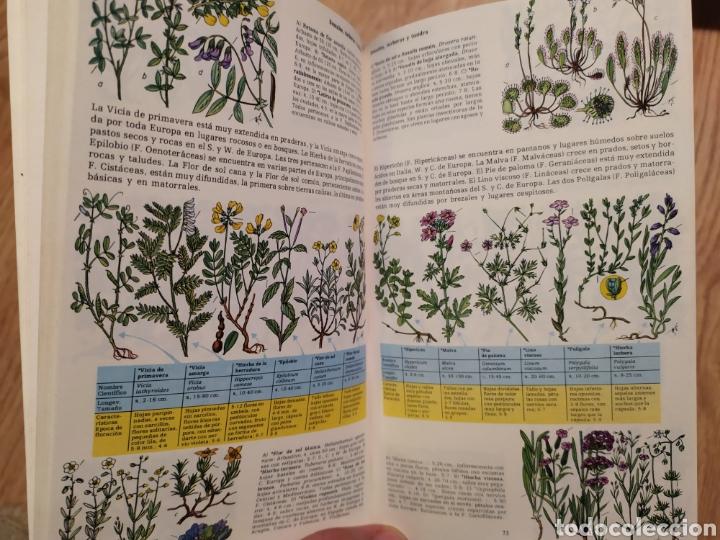 Libros de segunda mano: PLANTAS Y ANIMALES DE ESPAÑA Y EUROPA. Harry Garms - Foto 7 - 195328631