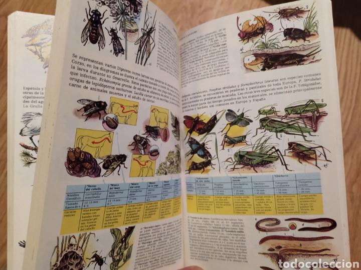 Libros de segunda mano: PLANTAS Y ANIMALES DE ESPAÑA Y EUROPA. Harry Garms - Foto 9 - 195328631