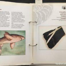 Libros de segunda mano: AUTENTICOS FOSILES DEL MUNDO, 61 FICHAS. Lote 198505965