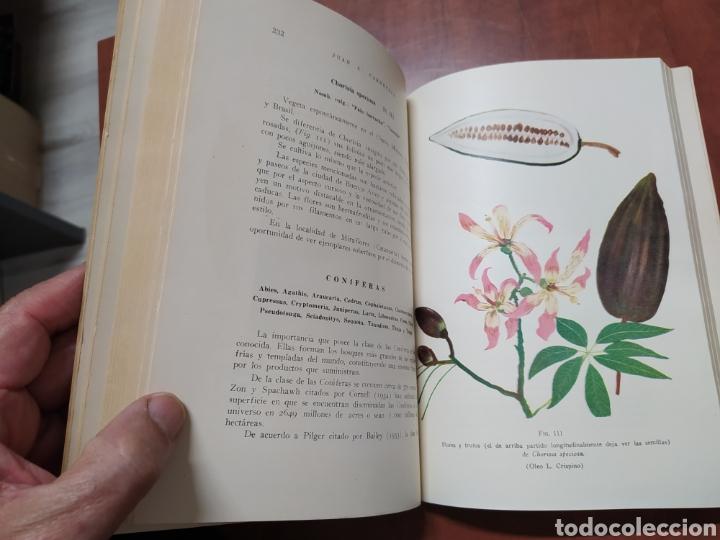 Libros de segunda mano: Árboles Forestales Juan A. Carnevale. - Foto 3 - 205041473