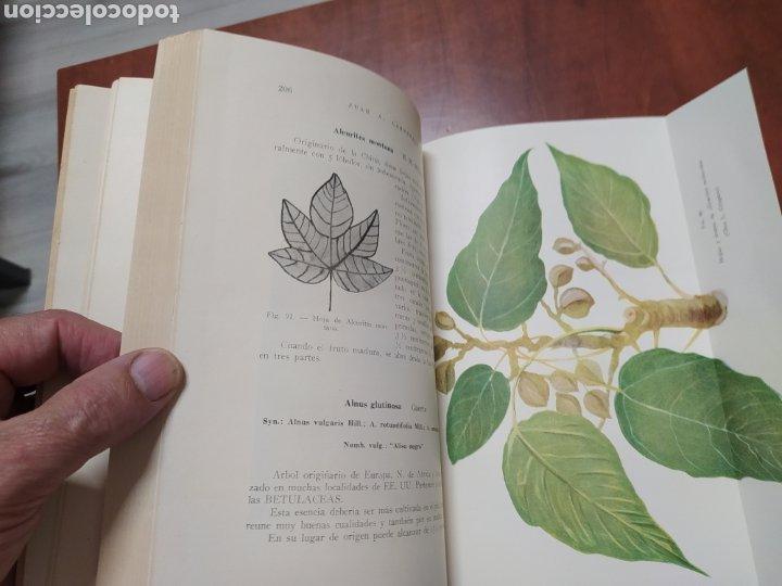Libros de segunda mano: Árboles Forestales Juan A. Carnevale. - Foto 4 - 205041473
