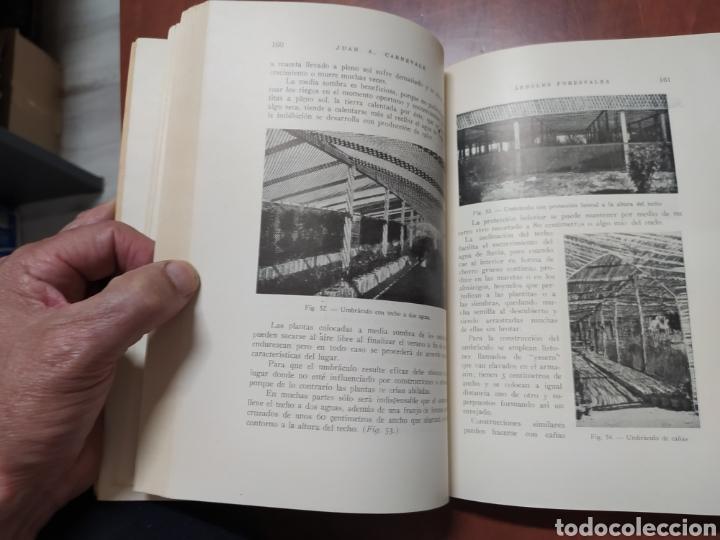 Libros de segunda mano: Árboles Forestales Juan A. Carnevale. - Foto 5 - 205041473