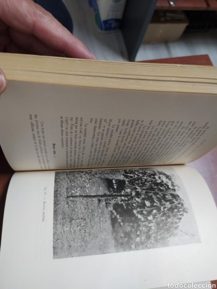 Libros de segunda mano: Árboles Forestales Juan A. Carnevale. - Foto 6 - 205041473