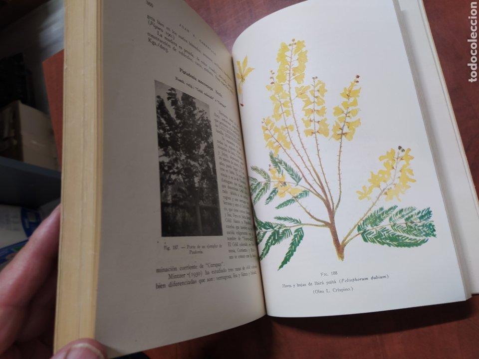 Libros de segunda mano: Árboles Forestales Juan A. Carnevale. - Foto 7 - 205041473