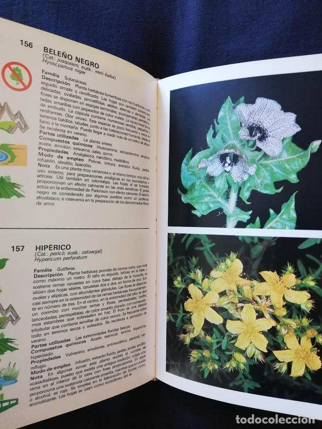 Libros de segunda mano: GUÍA DE PLANTAS MEDICINALES - ROBERTO CHIEJ - GRIJALBO - ILUSTRADA - Foto 3 - 209125866