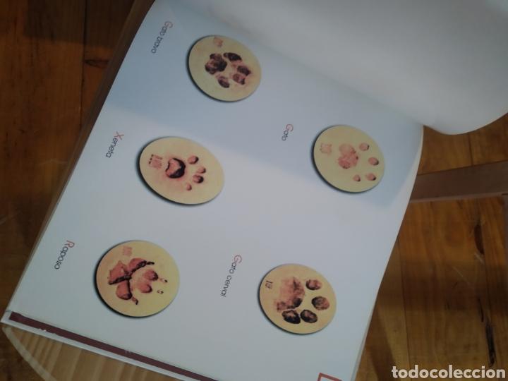 Libros de segunda mano: PEGADAS DE MAMIFEROS DE ESPAÑA. - Foto 6 - 210287470