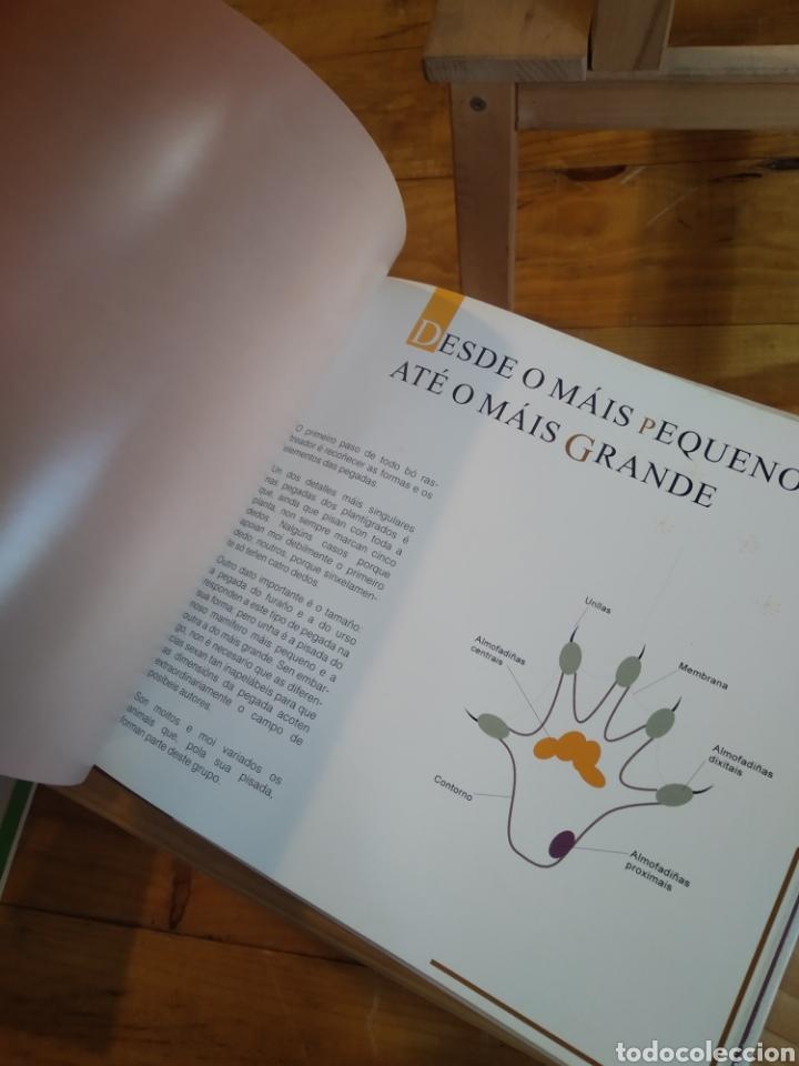 Libros de segunda mano: PEGADAS DE MAMIFEROS DE ESPAÑA. - Foto 8 - 210287470