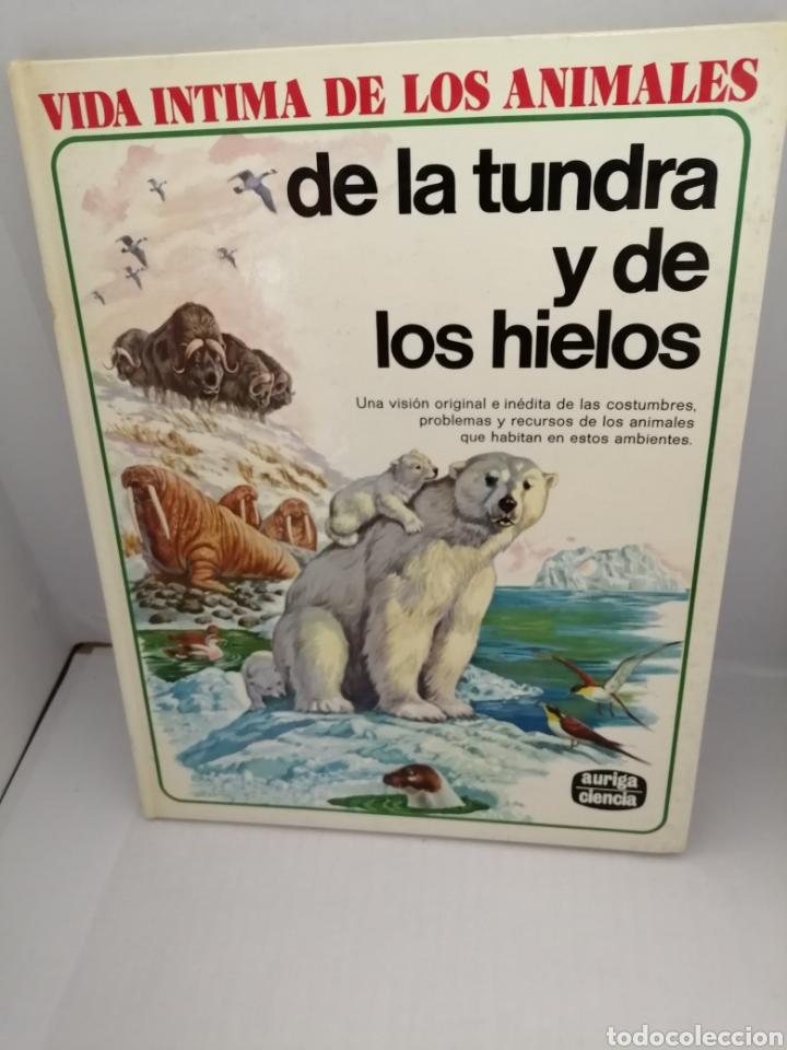 VIDA INTIMA DE LOS ANIMALES DE LA TUNDRA Y DE LOS HIELOS (Libros de Segunda Mano - Ciencias, Manuales y Oficios - Biología y Botánica)