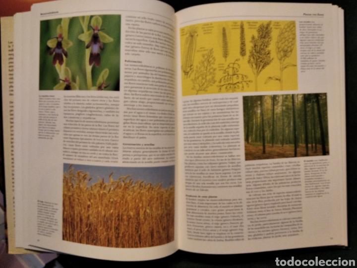 Libros de segunda mano: LAS PLANTAS, El Mundo de la botánica. Año 1986. - Foto 2 - 213445560
