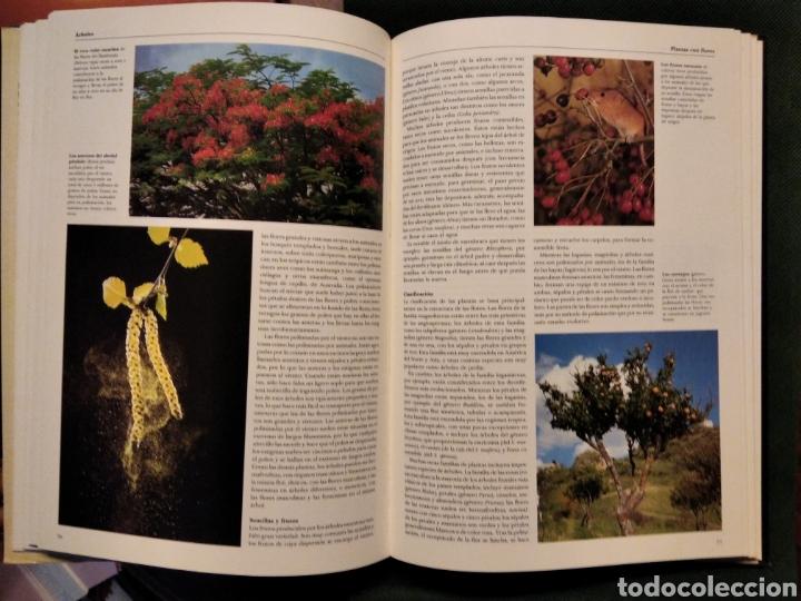 Libros de segunda mano: LAS PLANTAS, El Mundo de la botánica. Año 1986. - Foto 3 - 213445560