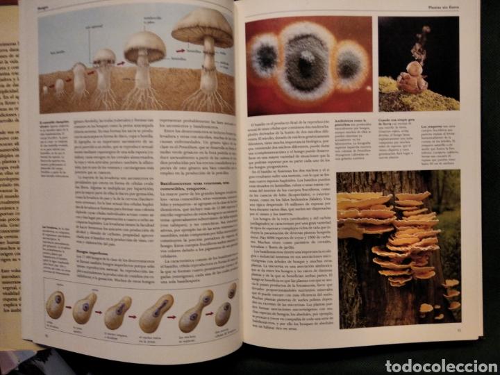 Libros de segunda mano: LAS PLANTAS, El Mundo de la botánica. Año 1986. - Foto 4 - 213445560