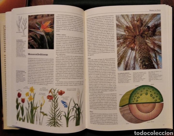 Libros de segunda mano: LAS PLANTAS, El Mundo de la botánica. Año 1986. - Foto 5 - 213445560
