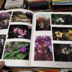 Libros de segunda mano: LES PLANTES DE JARDÍ A LES BALEARS . PERE LLOFRIU . MIQUEL FONT ,EDITOR 1ª EDICIÓ 1994 . MALLORCA. Lote 214470151