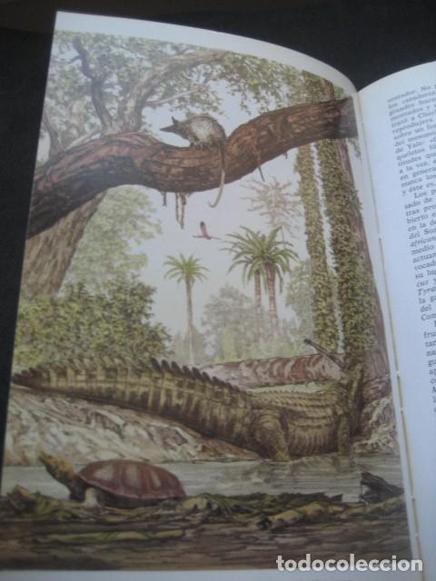 Libros de segunda mano: EL ENIGMA DE LOS DINOSAURIOS. FOSILES, PALEONTOLOGIA - Foto 11 - 216725662