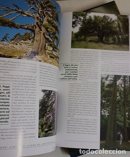 Libros de segunda mano: FORESTE DI CALABRIA, LIBRO EN ITALIANO,(BOSQUES DE CALABRIA) - Foto 5 - 217358128