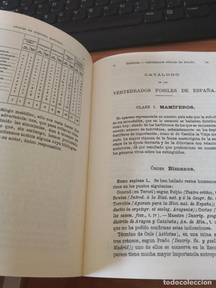 Libros de segunda mano: Enumeración y catálogo de los vertebrados fósiles de España.Salvador calderón y Arana 1876 facsimil - Foto 7 - 218522088