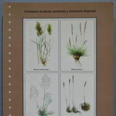 Libros de segunda mano: GRAMINEAS PRATENSES DE MADRID. F. GONZALEZ BERNALDEZ. Lote 218634560