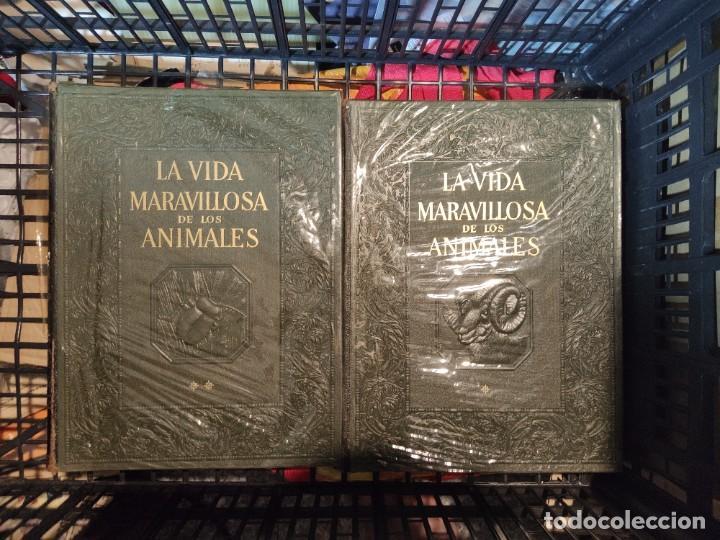 LA VIDA MARAVILLOSA DE LOS ANIMALES, DOS TOMOS, INSTITUTO GALLACH, BARCELONA, 1969 (Libros de Segunda Mano - Ciencias, Manuales y Oficios - Biología y Botánica)