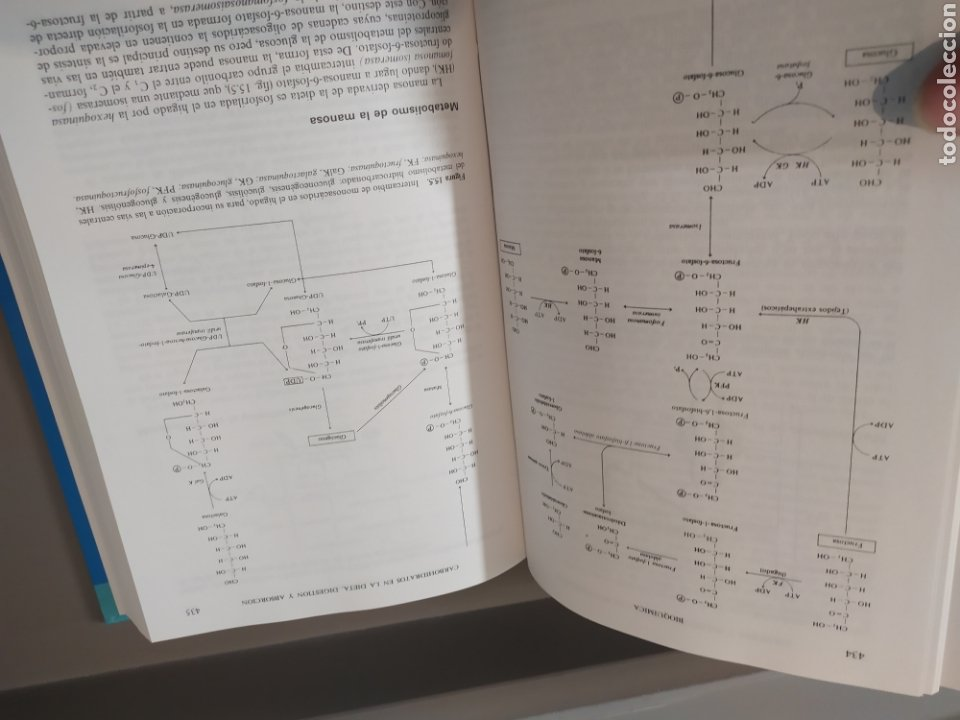 Libros de segunda mano de Ciencias: BIOQUÍMICA, BIOLOGÍA MOLECULAR Y BIOQUÍMICA FISIOLÓGICA. 2 VOLÚMENES. EMILIO HERRERA - McGRAW-HILL - Foto 11 - 220124780