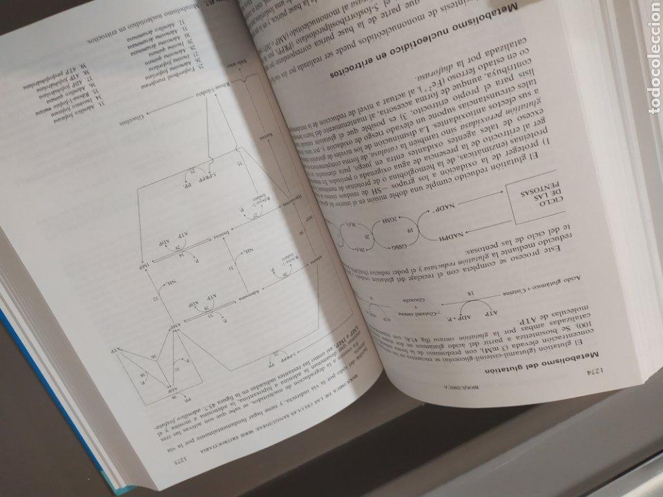 Libros de segunda mano de Ciencias: BIOQUÍMICA, BIOLOGÍA MOLECULAR Y BIOQUÍMICA FISIOLÓGICA. 2 VOLÚMENES. EMILIO HERRERA - McGRAW-HILL - Foto 22 - 220124780