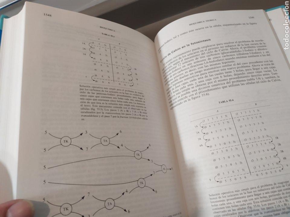 Libros de segunda mano de Ciencias: BIOQUÍMICA, BIOLOGÍA MOLECULAR Y BIOQUÍMICA FISIOLÓGICA. 2 VOLÚMENES. EMILIO HERRERA - McGRAW-HILL - Foto 25 - 220124780