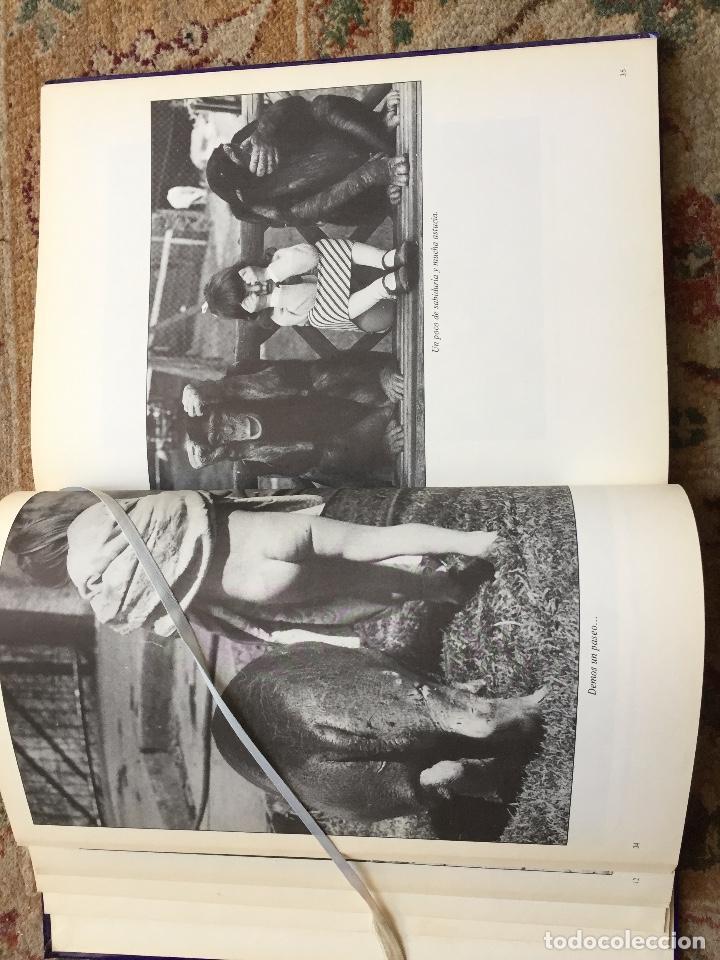 Libros de segunda mano: NOSOTROS...LOS ANIMALES. DE JACQUES BORGE-NICOLAS VIASNOFF. EDT EURO. 1976 - Foto 5 - 220577358