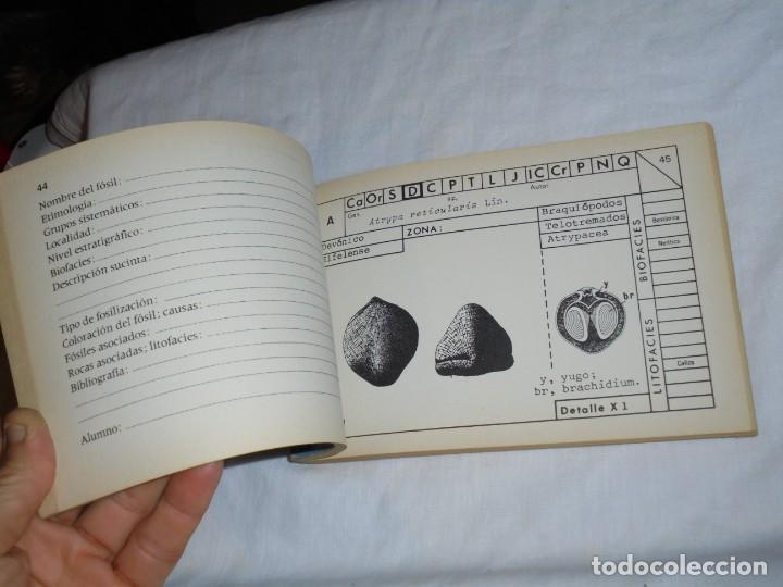 Libros de segunda mano: PALEONTOLOGIA ESTRATIGRAFICA.2.-BRAQUIOPODOS.GASTEROPODOS.PALECIPODOS(1).BERMUDO MELENDEZ.PARANINFO - Foto 6 - 221715800
