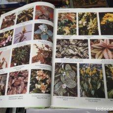 Libros de segunda mano: TROPICA . COLOR CYCLOPEDIA OF EXOTIC PLANTS AND TREES. A.B. GRAF . 1992 . 7000 FOTOGRAFÍAS .. Lote 222847791