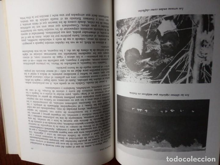 Libros de segunda mano: GALICIA VIVA. LA FAUNA GALLEGA Y ALGO MAS/ JOSE CURT MARTINEZ. - Foto 6 - 226845279