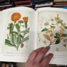 Libros de segunda mano: THE ART OF BOTANICAL ILLUSTRATION. WILFRID BLUNT - WILLIAM STEARN. ANTIQUE COLLECTOR'S. 1994. FLORA. Lote 228591115