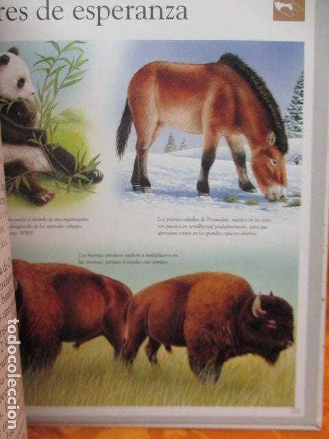 Libros de segunda mano: Dinosaurios Y Animales Desaparecidos (A partir de 10 años) - Gabriel Beaufay - Foto 15 - 263107325