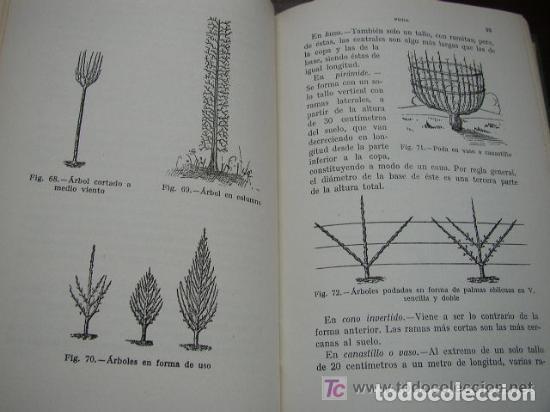 Libros de segunda mano: HORTICULTURA Y FRUTICULTURA-ROGELIO PEÑA-3ª. EDC.- JOSÉ MONTESÓ, EDT.- 1955-BAR.-VER FOTOS. - Foto 5 - 234917025