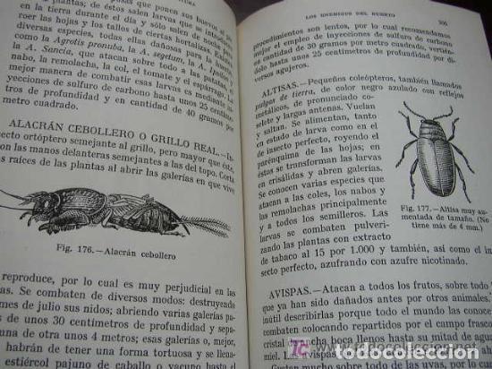 Libros de segunda mano: HORTICULTURA Y FRUTICULTURA-ROGELIO PEÑA-3ª. EDC.- JOSÉ MONTESÓ, EDT.- 1955-BAR.-VER FOTOS. - Foto 7 - 234917025