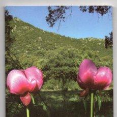 Libros de segunda mano: GUÍA DE PLANTAS DE HOYO DE MANZANARES. FOLLETO DE 42 PÁGINAS. 11 X 21 CM.. Lote 236706950