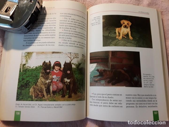 Libros de segunda mano: Dos libros sobre el perro presa canario. Manuel martin y Pascual asensi - Foto 7 - 241447735