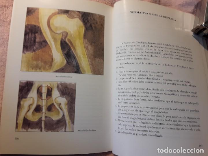 Libros de segunda mano: Dos libros sobre el perro presa canario. Manuel martin y Pascual asensi - Foto 11 - 241447735