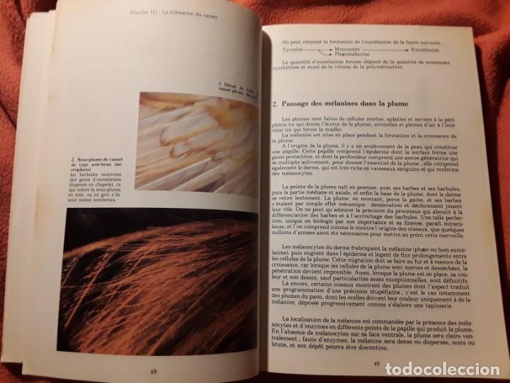 Libros de segunda mano: Le canari. Maurice Pomarede. Precis de canariculture (canarios, canaricultura) En francés - Foto 8 - 242001360
