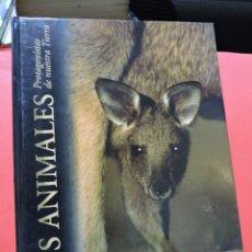 Livros em segunda mão: LOS ANIMALES PROTAGONISTAS DE NUESTRA TIERRA. LOS MEDIOS ÁRIDOS. EDICIONES RUEDA 2004. Lote 242440785