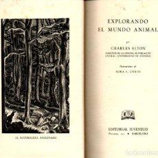 Libros de segunda mano: ELTON : EXPLORANDO EL MUNDO ANIMAL (JUVENTUD, 1945). Lote 244666340