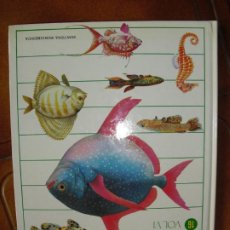 Libros de segunda mano: LIBRO NATURALEZA AMIGA. Lote 245356420