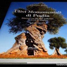 Libros de segunda mano: X171 - ULIVI MONUMENTALI DI PUGLIA. ARBOLES OLIVARES. OLIVA. ACEITUNA. GRAN FORMATO. GIOVANNI RESTA.. Lote 247526225